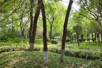 绿色公园景观