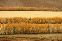 秋季田园景观