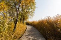 丛中的木栈道