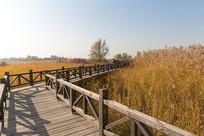 芦苇丛中的木头栈桥