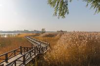 湿地公园的木栈桥