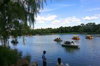 垂枊枝小船自然风景