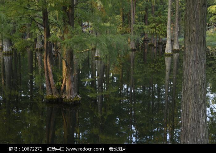 青西郊野湿地图片