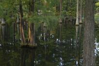 青西郊野湿地