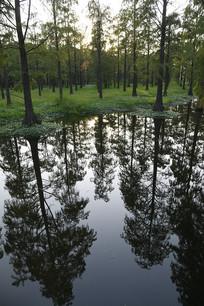 青西湿地公园