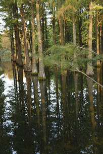 水中灌木丛
