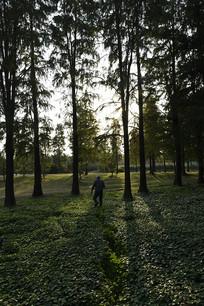 夕阳斜下树林