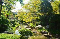初秋树林小溪风景