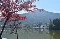 湖边枫树秋景