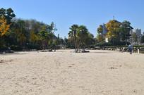 沙滩树木风景图片
