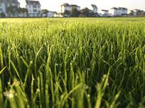 绿地绿草家