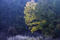 秋韵-秋季树林