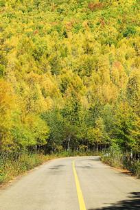 大兴安岭密林秋景公路蜿蜒