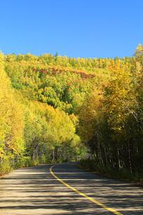 大兴安岭森林公路秋景