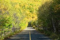 大兴安岭山林公路秋色