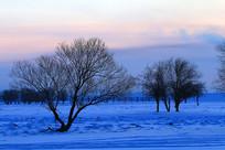 额尔古纳冬季树木雪景晨光