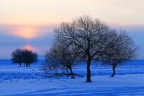 额尔古纳雪原树木朝阳晨光