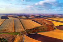 航拍金色的田野风光