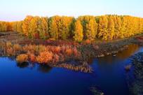 金色树林蓝色河流风景
