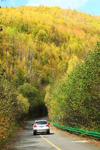 林区金秋越野车行驶在山路上