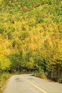 密林深处的山林公路