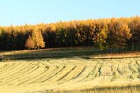 内蒙古农场秋季农田风光