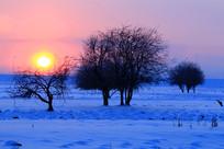 雪野树林日出