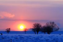 雪原树林树木日出暖阳
