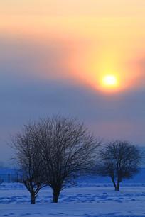雪原树木朝阳
