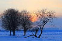 雪域雪原树朝阳晨光