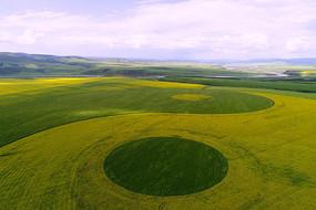 油菜花田与麦田组合的太极图