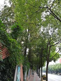 人行道树影