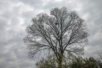阴云鸟巢冬树