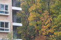 住宅楼外的秋色