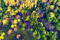 大兴安岭色彩斑斓的秋季森林