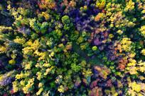 航拍大兴安岭秋季丛林