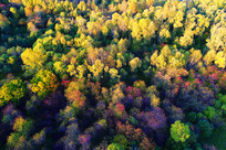 航拍大兴安岭树林秋色