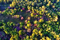 航拍秋季茂密五彩林