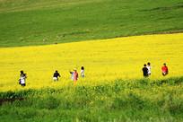 垦区观光农业游览的游客