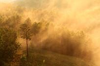 朝阳笼罩的森林风景