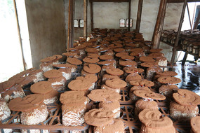灵芝孢子粉种植厂房