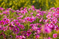 错落的紫色小花