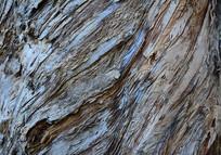 木皮表面特写