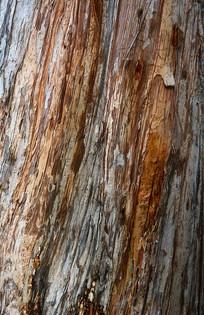 木皮纹理肌理实拍