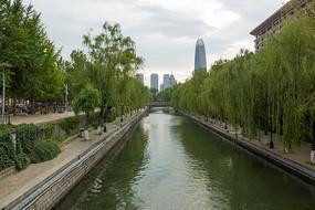 山东济南护城河及河边柳树