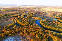 金色的茂密树林河流蜿蜒