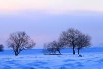 雪域雪原树林朝阳晨光