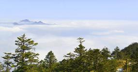 成都西岭雪山高山云海及原始森林