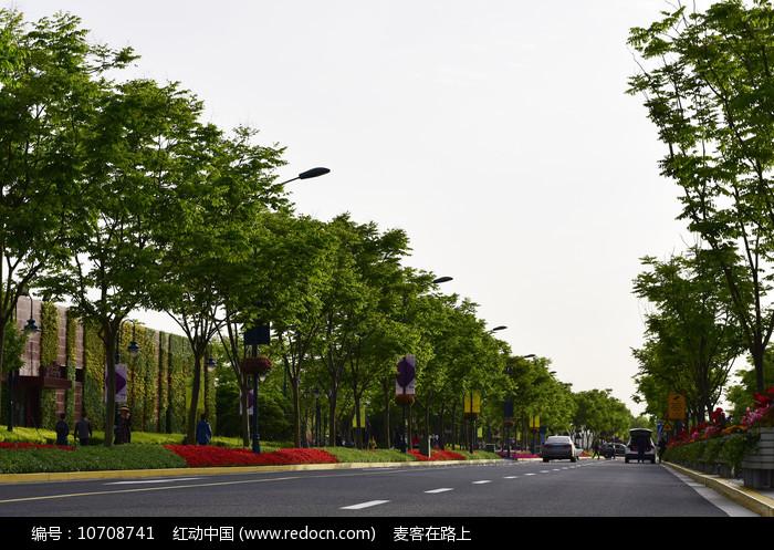 公路旁的树木图片