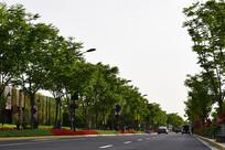 公路旁的树木